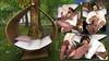 {ACD} Teardrop Hanging Chair PG