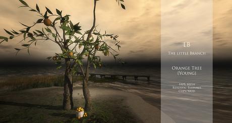 LB Realistic Mesh Orange Tree {young}