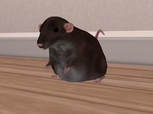 +Nelaware+ Rat Brown ~1 Prim~
