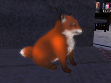 +Nelaware+ Fox ~1 Prim~