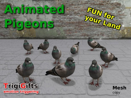Animated Pigeons