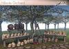 Jian Hillside Orchard :: Complete Set
