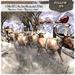 !! Follow US !! NEW Santa Claus (white) big sleigh COPY