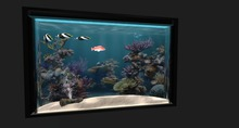 [Akaesha] Fish Tank ( Fish Aquarium )