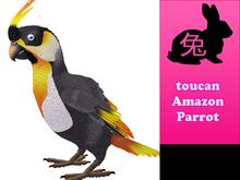 toucan Amazon Parrot