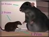+Nelaware+ Rat ~Bundle~