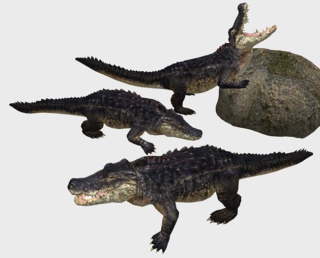 Crocodile Pack - Mesh - Full Perm