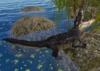 Croc pic 1