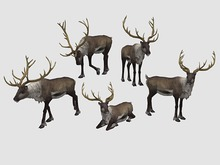 Reindeer Pack - Mesh - Full Perm