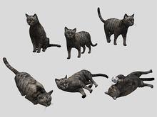 Cat Pack - Mesh - Full Perm