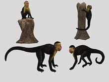 Monkey Pack - Mesh - Full Perm