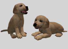 Labrador Puppy Pack - Mesh - Full Perm