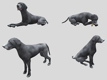 Weimaraner Dog Pack - Mesh - Full Perm