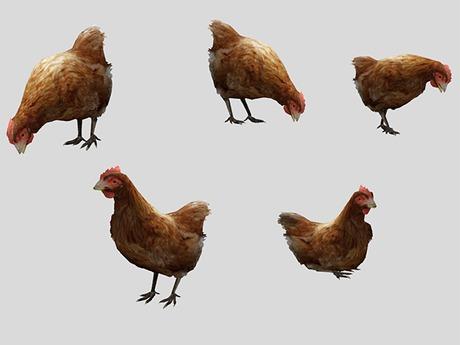 Chicken Pack - Mesh - Full Perm