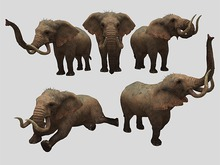 Elephant Pack - Mesh - Full Perm