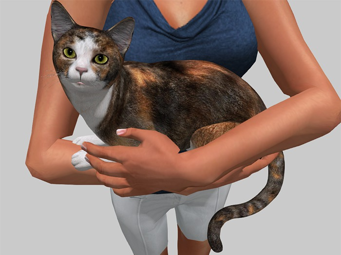 Calico Cat Wearable - Mesh - Full Perm