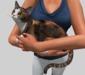 Holding cat pic 3
