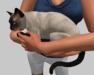 Siamese Cat Wearable - Mesh - Full Perm