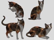 Calico Cat Pack - Mesh - Full Perm