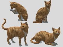 Ginger Tabby Cat Pack - Mesh - Full Perm