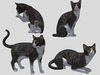 Grey Tabby Cat Pack - Mesh - Full Perm