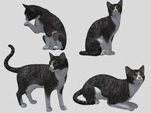 Grey Tabby Cat Pack - Mesh - Full Perm