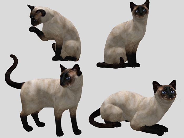 Siamese Cat Pack - Mesh - Full Perm
