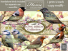 Tlc song birds collection with birds and tags