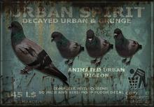 Animated Urban Pigeon