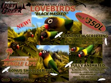 Lost Creek LoveBird Black Masked
