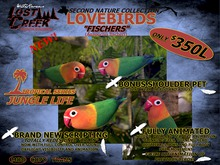Lost Creek Love Bird Fischers