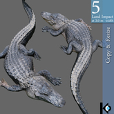 3D / Alligator / 5 land impact