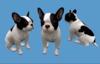 French Bulldog Sitting - Mesh - Full Perm