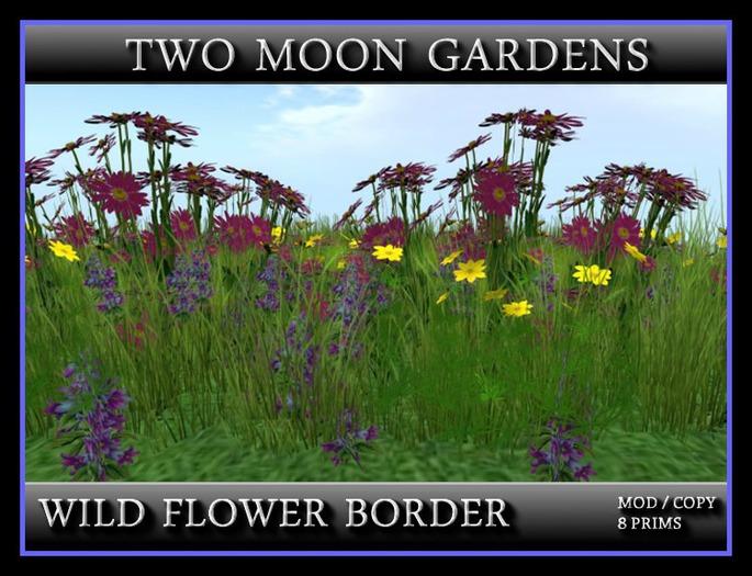 WILD FLOWER BORDER 2