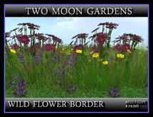TMG - WILD FLOWER BORDER 2*