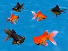 Telescope Goldfish Animated Pack - Mesh - Full Perm
