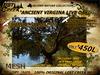 Lost Creek MESH Ancient Virginia Live Oak Model 2