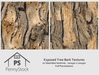 PennyStock - Seamless Exposed Bark Textures