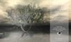 Bended Bradford Mesh Tree {4Seasons}