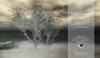 Bradford Mesh Tree v2 {4Seasons}