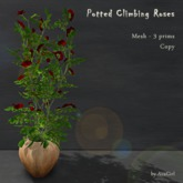 AvaGirl - Potted Climbing Red Roses
