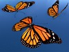 Monarch Butterfly Animated Pack - Mesh - Full Perm