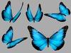 Morpho Butterfly Animated Pack - Mesh - Full Perm