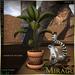 Display leafyplant africa