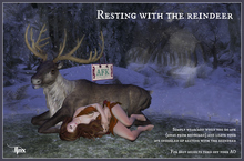 Jinx : Resting with the Reindeer