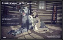 Jinx : Resting with the Weimaraner
