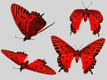 Red Swallowtail Butterfly Animated - Mesh - Full Perm
