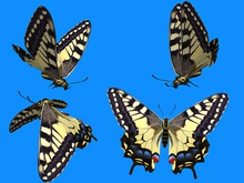 Yellow Swallowtail Butterfly Animated - Mesh - Full Perm