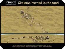 Gaagii - Skeleton burried in sand (sand not included)