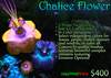 Chalice Flower Set  (boxed)